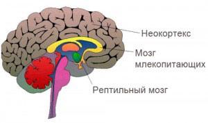 Методика РПТ (Reference Point Therapy) Одесса